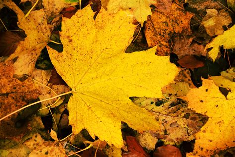 picture wood flora ground yellow leaf nature