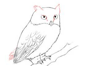 How to draw an owl draw central