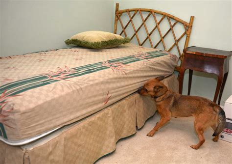 bed bug sniffing dog bed bug sniffing dogs cost dog beds gallery images and dog