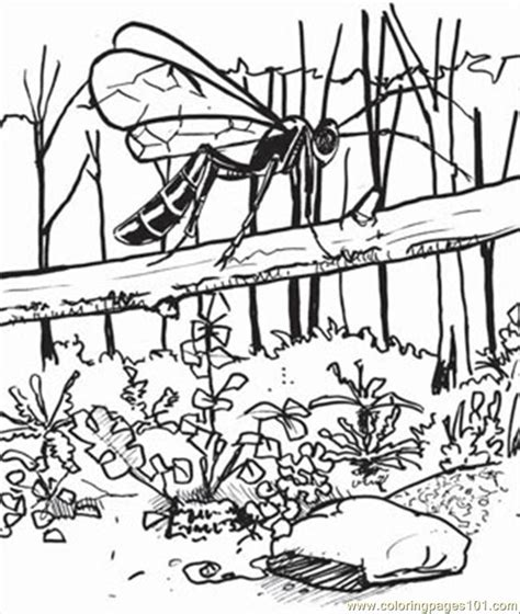 jungle insects coloring pages free coloring pages of rainforest insects