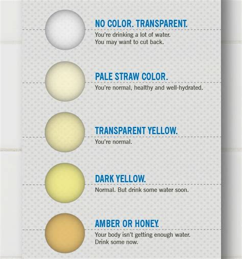 colored urine free urine chart coloring pages