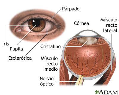 burning eyes light sensitivity anatom 237 a interna y externa del ojo medlineplus