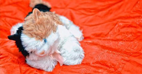 Boneka Wisuda Kucing gambar boneka kucing tidur gambar boneka lucu