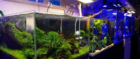 aquarium design centre the aquatic design centre adc aquarium design bespoke