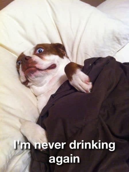 Dumb Dog Meme