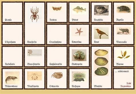 species name plant genus and species names images frompo