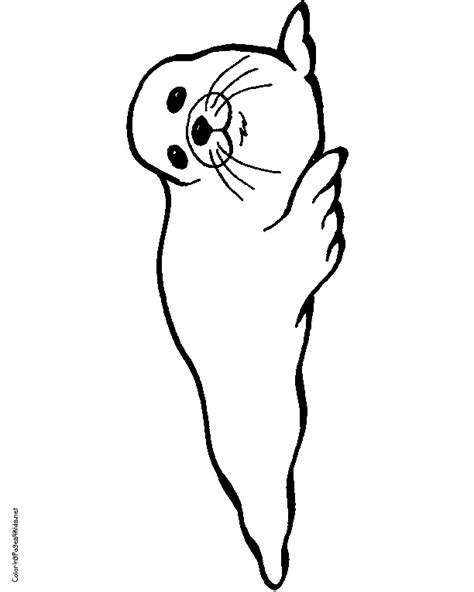 cute seal coloring pages best seal coloring pages 41 on free colouring with baby