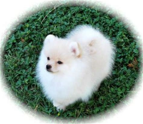 free puppies in vermont dogs barre vt free classified ads