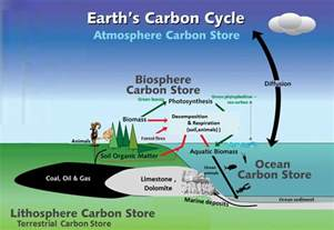 carbon and nitrogen cycle worksheet abitlikethis