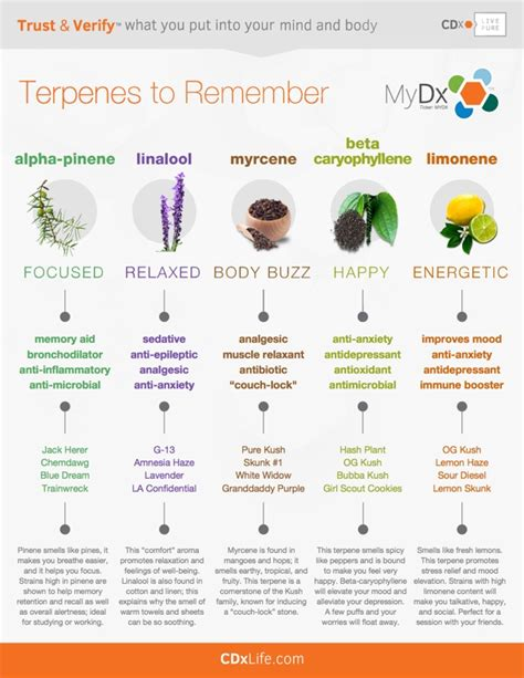 the medicinal value of terpene testing cannabis kurple magazine what can terpenes do for you medicalmarijuanablog