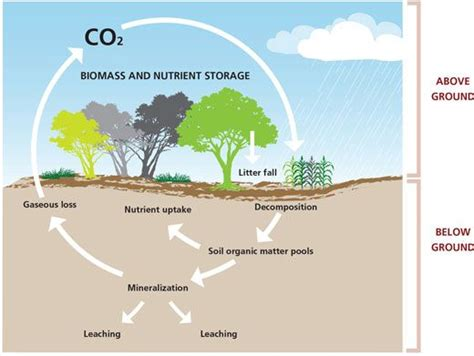 what is a carbon sink carbon sink areas of vegetation that absorb carbon