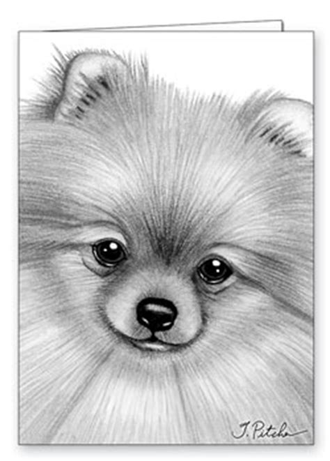 pomeranian colouring pages page 2 dog breeds picture