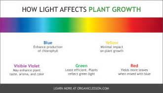does the color of light affect plant growth best grow lights and ls for indoor vegetable gardening