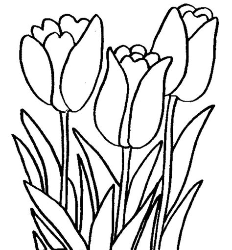bermacam contoh gambar mewarna bunga matahari