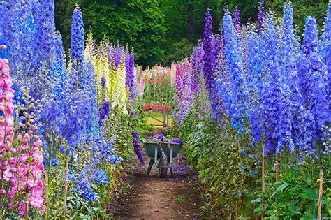 flowering gardens autumn flowering cottage garden plants 171 margarite gardens