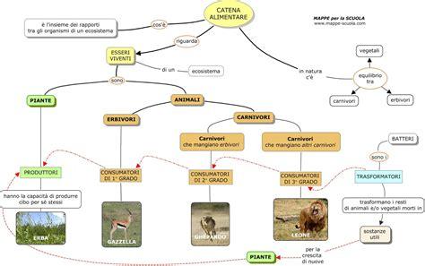 la catena alimentare mappe per la scuola la catena alimentare
