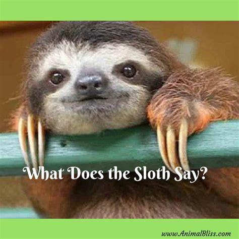 what does the say what does the sloth say nothing but cuteness
