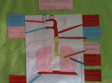como hacer una maqueta del sistema respiratorio maqueta aparato respiratorio en rompecabezas maquetas y