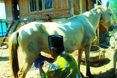 Kuda Liar Khas Sumbawa andisunesia terios7wonders petualangan 7 bersama terios sahabat petualang