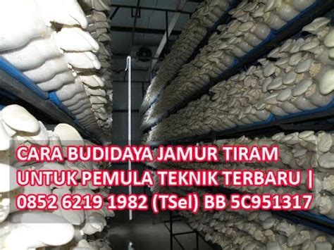 Bibit Jamur Tiram Wonosobo cara budidaya jamur tiram sebagai usaha rumahan doovi
