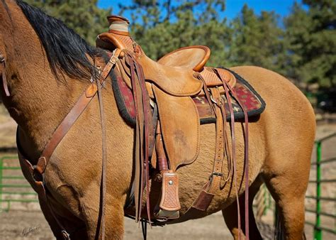 tack for sale buckaroo leather horse tack use care and maintenance