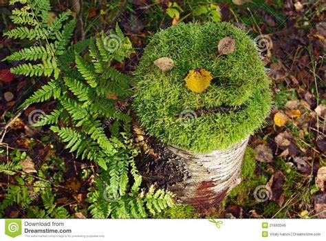 tree stump  face  moss royalty  stock image