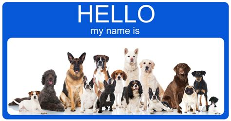 names for dogs top 100 most popular and names 2017 fallinpets