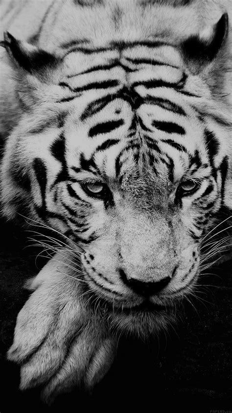 ml bw dark tiger animal papersco