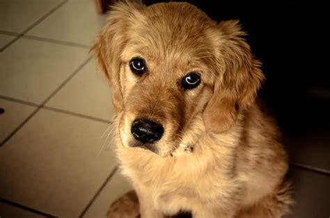 animali appartamento cani e gatti in condominio non possono essere pi 249 vietati