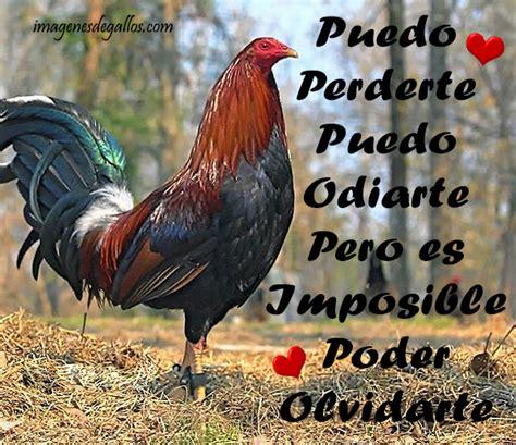 imagenes con frases de galleros imagenes de gallos