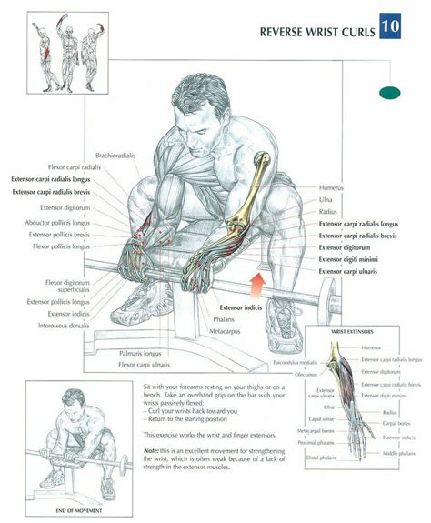 incline bench corkscrew curl 16 best tricep exercises images on pinterest exercise