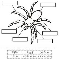 Garden Spider Diagram My Homeschooling Journal September 2014