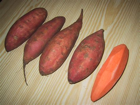 file sweet potato brazil2 jpg wikimedia commons file sweet potatoes jpg wikimedia commons