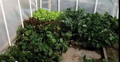 backyard greenhouse winter video a backyard greenhouse to grow food in winter center square gardens