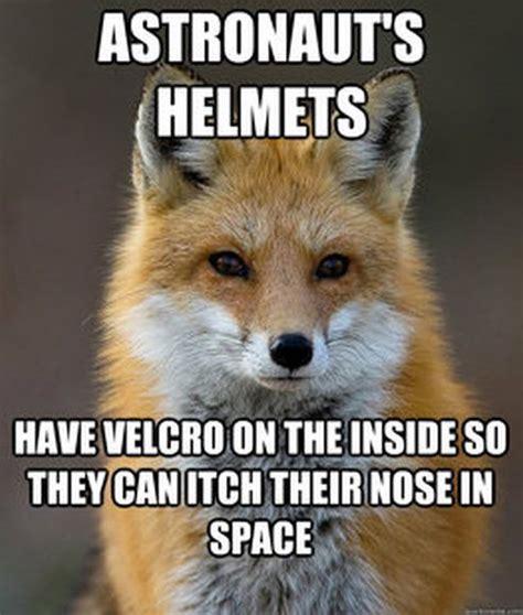 Fox Meme - fun fact fox meme related keywords fun fact fox meme