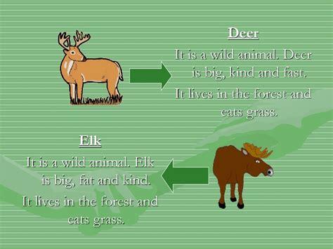 wild  domestic animals prezentatsiya onlayn