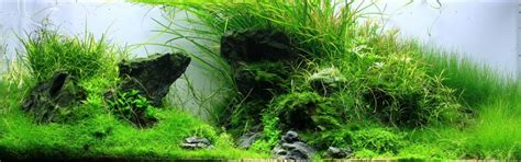 Layout Aquascape by Layout Forms In Aquascaping Aquascaping Wiki