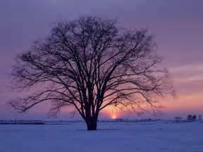 Winter Tree by Psych Your Mind Seasonal Affective Disorder An Extreme