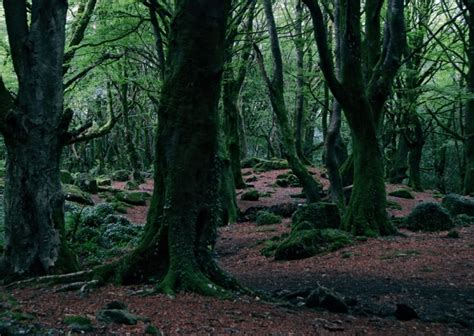 edges forbidden forest spring audio atmosphere