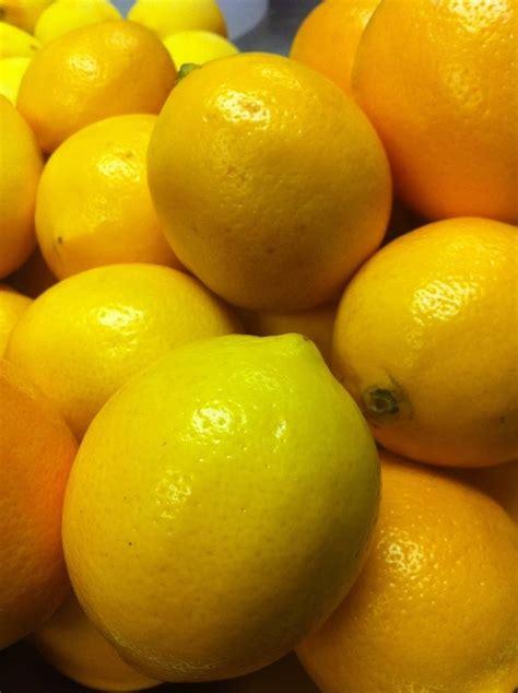 meyer lemon madisono s gelato meyer lemons