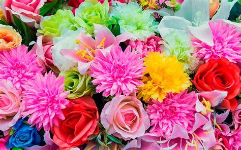 fiore della gelosia il significato e la simbologia dei fiori con la lettera a