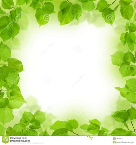imagenes hojas verdes cap 237 tulo de hojas verdes fondo del follaje fotos de