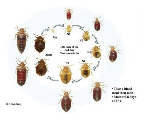 why do bed bugs come out at night 100 best images about bed bug bites on pinterest bed bug