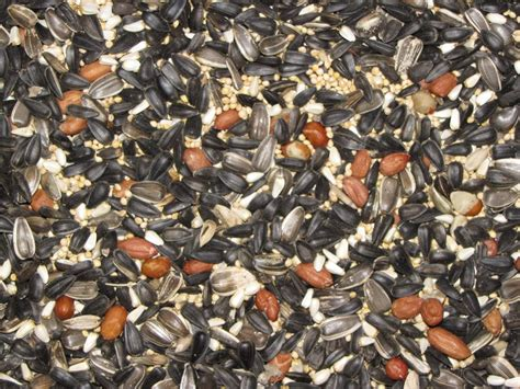wild bird seed bird seed mixture bird food