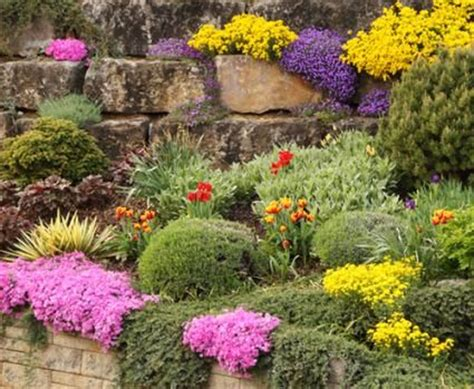 plants for rock garden best plants for rock gardens gardening