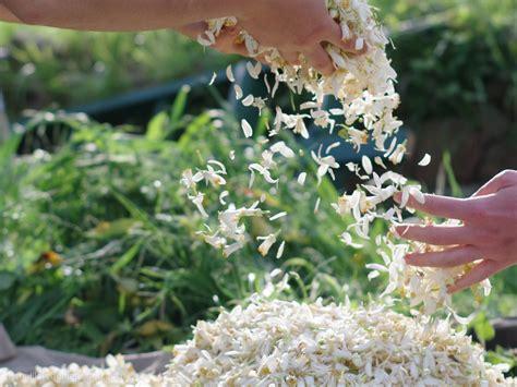 acqua fiori arancio acqua di fiori di arancio amaro nobile essenza di liguria