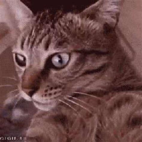 best catnip best catnip kittyworks
