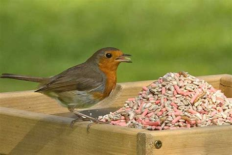 types of bird food british bird lovers