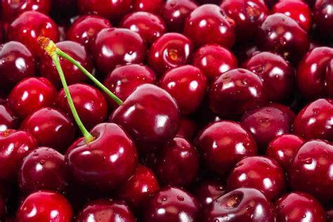can dogs cherries can dogs eat cherries ultimate home