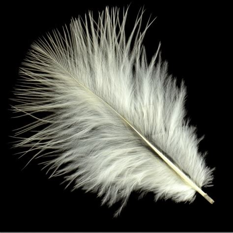 feather with marabou feathers white